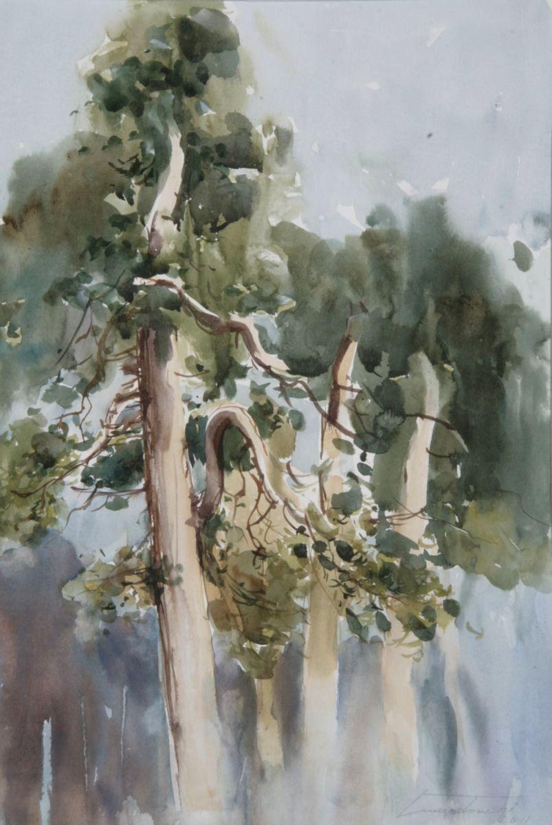 Sosny we mgle I. 35x50 cm. Kazimierz Twardowski
