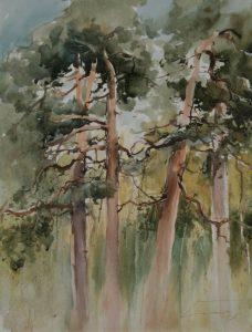 Jesienne sosny. 50x65 cm. Kazimierz Twardowski